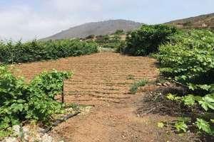 Участок Продажа в Tejina de Guia, Guía de Isora, Santa Cruz de Tenerife, Tenerife.