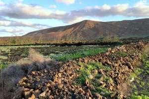 Rural/Agricultural land for sale in El Cuchillo, Tinajo, Lanzarote.