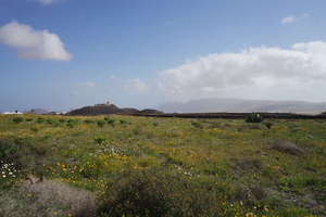 Rural/Agricultural land for sale in Tao, Teguise, Lanzarote.