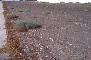 Terreno vendita in Tahiche, Teguise, Lanzarote.