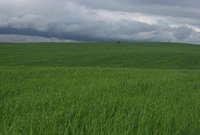 Terreno rústico/agrícola en Feria, Badajoz.