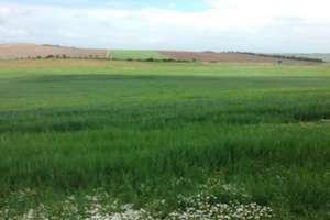 Terreno rústico/agrícola venta en Olivenza, Badajoz.