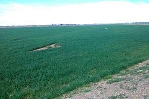 Terreno rústico/agrícola venta en Don Benito, Badajoz.