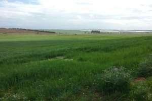 Terreno rústico/agrícola venta en Badajoz.