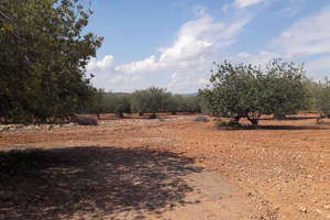 Terreni agricoli vendita in Partida Suterrañes, Vinaròs, Castellón.