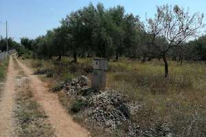 Rural/Agricultural land for sale in Suterrañes, Vinaròs, Castellón.