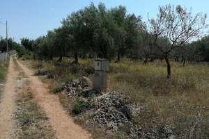 农业用地 出售 进入 Suterrañes, Vinaròs, Castellón.
