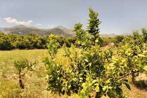 Rural/Agricultural land for sale in Pego, Alicante.