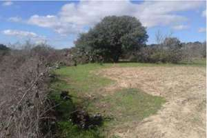 Plot for sale in Cenicientos, Madrid.