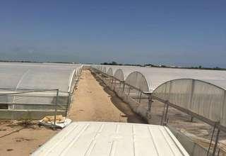 Terreno rústico/agrícola venta en El Mareny de San Llorenzo, Cullera, Valencia.
