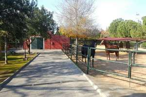 Ranch zu verkaufen in Carmona, La Campiña, Sevilla.