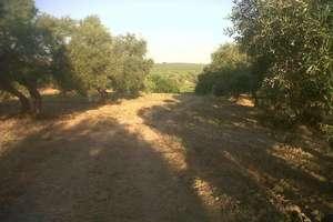 Terreno rústico/agrícola venta en Espartinas, Aljarafe, Sevilla.