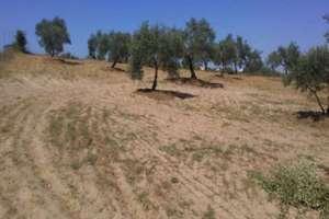 Ranch zu verkaufen in Almonte, Huelva.