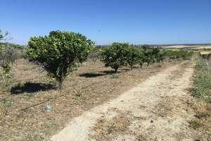 Ranch zu verkaufen in Palma del Condado (La), Palma del Condado (La), Huelva.