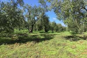 Ranch vendre en Aznalcazar, Aljarafe, Sevilla.