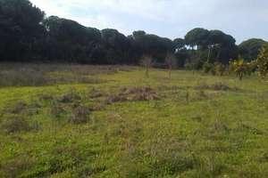 Plot for sale in Almonte, Huelva.