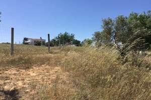 Rancho venda em Almonte, Huelva.