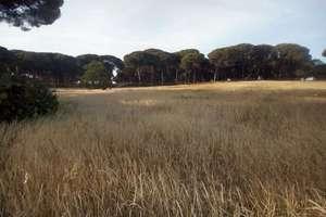 Plot for sale in El Rocío, Almonte, Huelva.