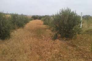 Plot for sale in Carretera de Cabezudos, Almonte, Huelva.