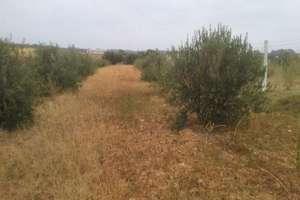 Grundstück/Finca zu verkaufen in Carretera de Cabezudos, Almonte, Huelva.