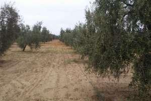 Grundstück/Finca zu verkaufen in Raigal, Almonte, Huelva.
