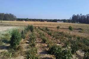 Grundstück/Finca zu verkaufen in Paraje el Porretal, Almonte, Huelva.