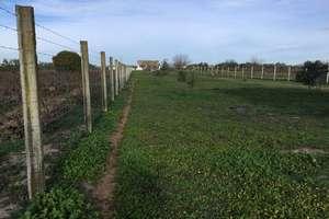 Ranch zu verkaufen in Entre Almonte e Hinojos, Huelva.