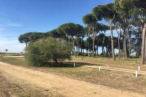 Fincaer i Almonte, Huelva.