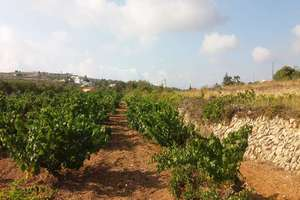 农业用地 出售 进入 Teulada, Alicante.