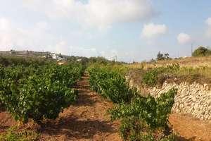 Landwirtschaftlichen Flächen zu verkaufen in Teulada, Alicante.