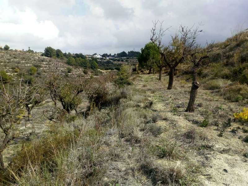 Homes for sale in Alicante