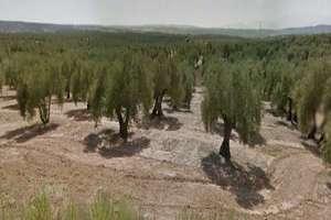Terreno rústico/agrícola venta en Martín Sanchez, Bailén, Jaén.