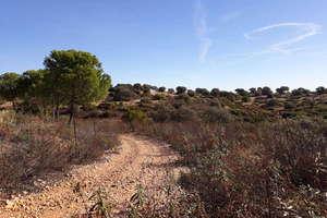 Plot for sale in Otros, Bailén, Jaén.