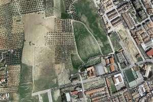 农业用地 出售 进入 Pisos verdes, Bailén, Jaén.