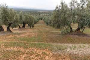 农业用地 出售 进入 Cruce el Pantano., Baños de la Encina, Jaén.