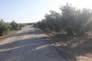 Rural/Agricultural land for sale in Bailén, Jaén.
