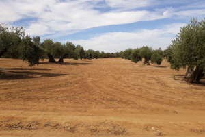Terreno vendita in Bailén, Jaén.