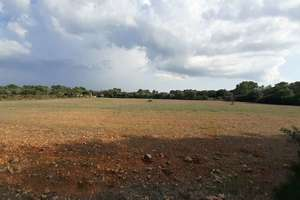 Plot for sale in Sancellas / Sencelles, Sancellas / Sencelles, Baleares (Illes Balears), Mallorca.