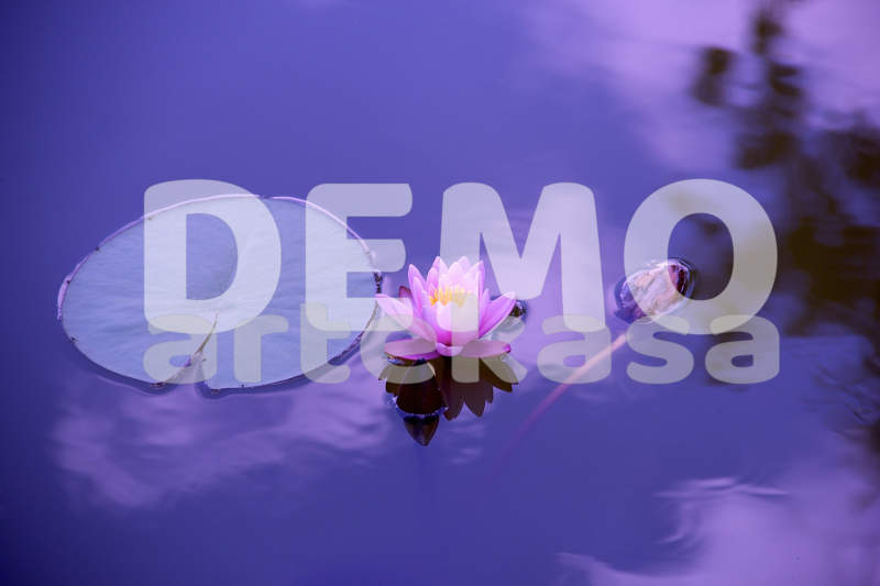 Inmodemo. Demo Agency